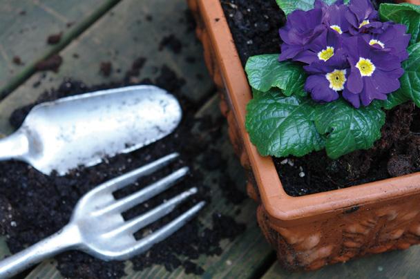 Piantare seminare kb giardino - Terriccio fertile ...