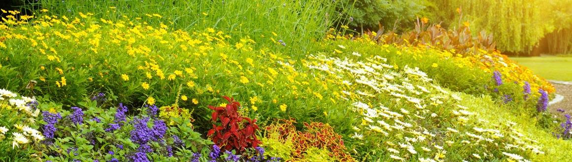concime piante