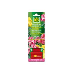 Plantas de Interior y Terrazas - Bastoncitos_Plantas_de_Flores_30